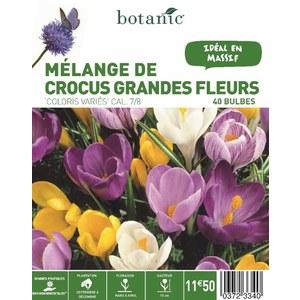 Bulbe crocus grandes fleurs en mélange multicolore botanic® x 60 372334