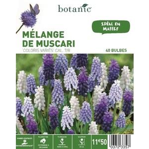 Bulbe muscari en mélange multicolore botanic® x 40 372335