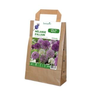 Mélange Allium en panier 372337