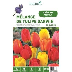 Mélange Tulipe darwin en panier 372338