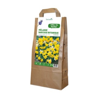 Bulbe narcisse botanique en mélange multicolore botanic® x 40 372349