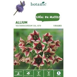 Bulbe allium nectaroscordum rouge et jaune botanic® x 5 372362