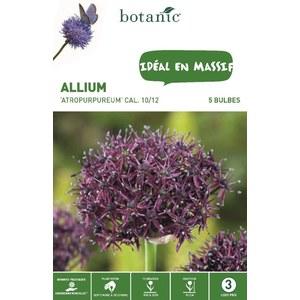 Bulbe allium atropurpureum rose botanic® x 5 372363