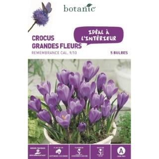 Bulbe pour intérieur crocus remembrance violet botanic® x 5 372368