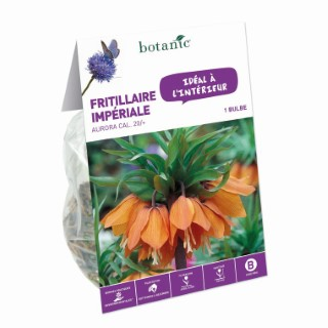Bulbe pour intérieur fritillaire aurora orange botanic® 372369