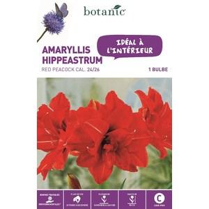 Bulbe pour intérieur amaryllis red peacock rouge botanic® 372375