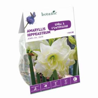 Bulbe pour intérieur amaryllis jewel blanche botanic® 372378