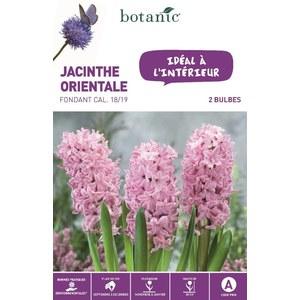 Jacinthe Fondant rose botanic® - 2 bulbes d'intérieur 372384