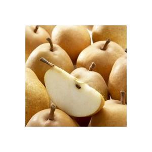 Poirier Fertilia Delbard® Delwilmor bio pot 12 L 655456