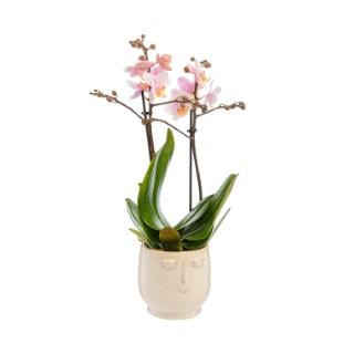 Phalaenopsis 2 brins avec cache-pot Ø 9 cm 373250