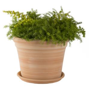 Pot gamme Cocio bordo Ø 42 cm 379440