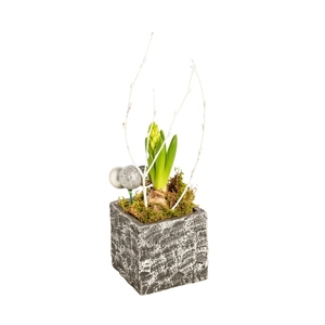Jacinthe pot argent. La composition 380274
