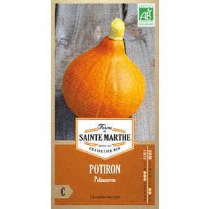 Potiron Potimarron 382739