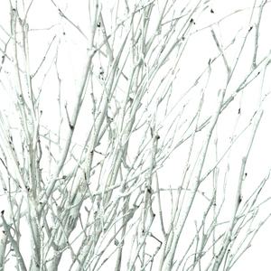 Botte 5 branches de bouleau peintes 70cm 383381