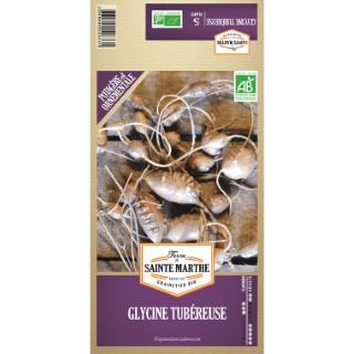 Glycine tubéreuse Bio x 5 bulbes 386750