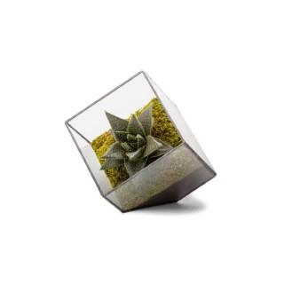 Terrarium Cubic en verre transparent 15x15x15 cm 390610