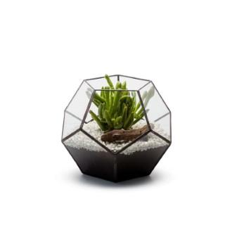 Terrarium Octo en verre transparent 22x22x18 cm 390611