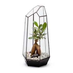 Terrarium Elégant en verre transparent 18x18x38 cm 390612