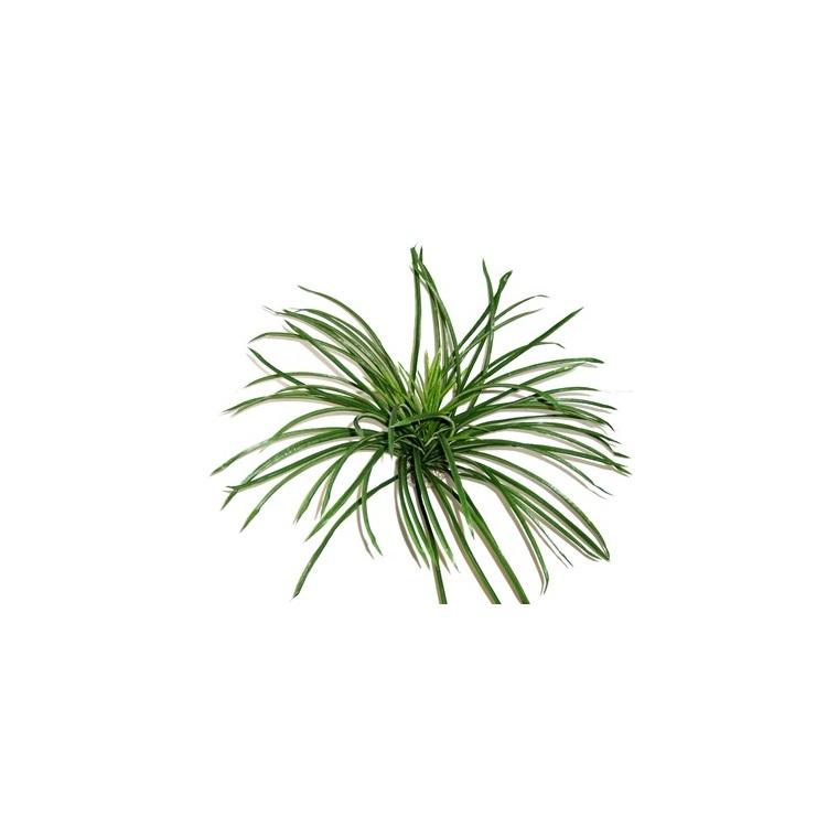 Décor avec herbe verte en tissu pour terrarium 25 x 50 cm 304420