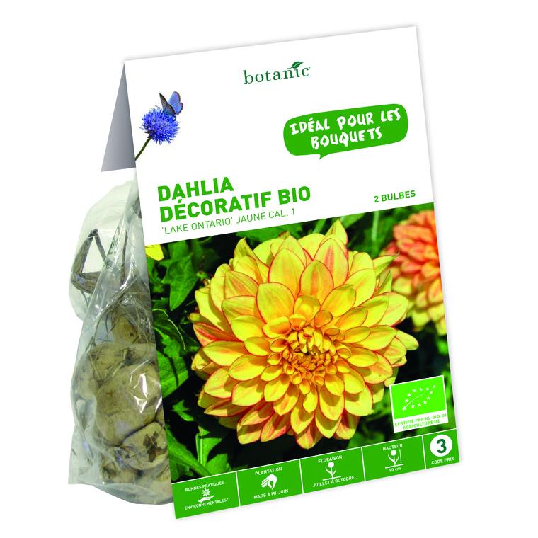 2 bulbes de Dahlia Décoratif Lake Ontario BIO – Jaune 310192