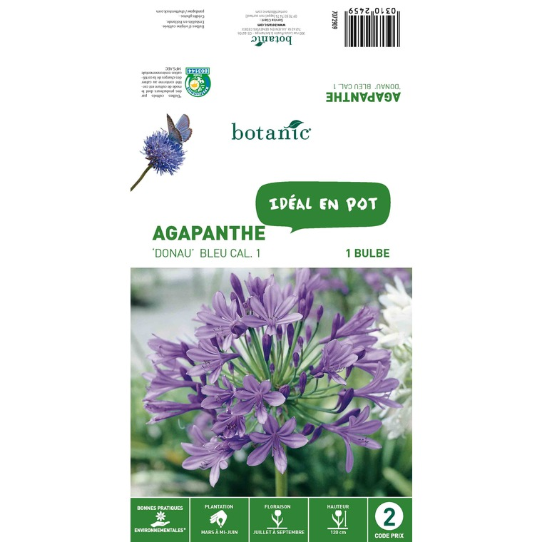Agapanthe Donau - Bleu - 1 bulbe 310245