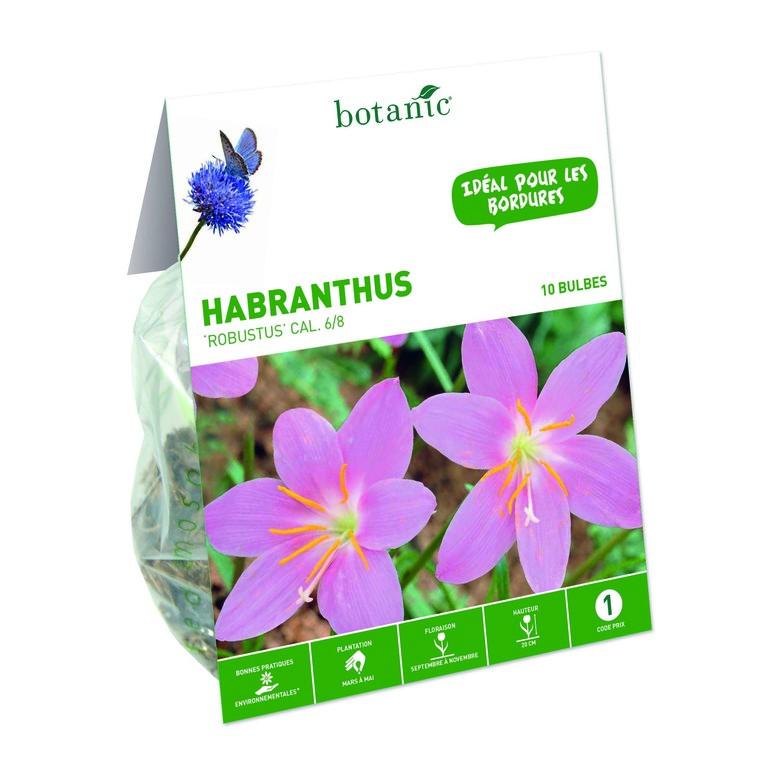 15 bulbes de Habranthus Zephyranthes Robustus – Rose Blanc 310295