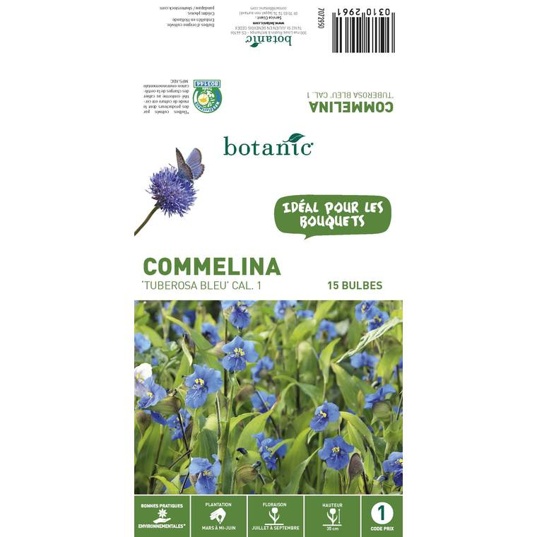 15 bulbes de Commelina Tuberosa Bleu 310296