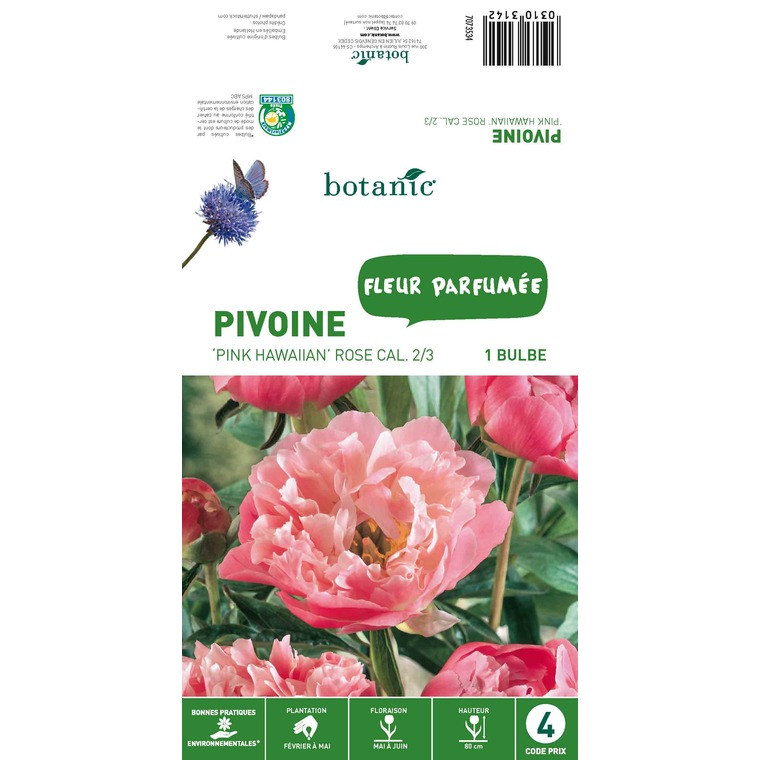 Bulbe de Pivoine - Rose 310314