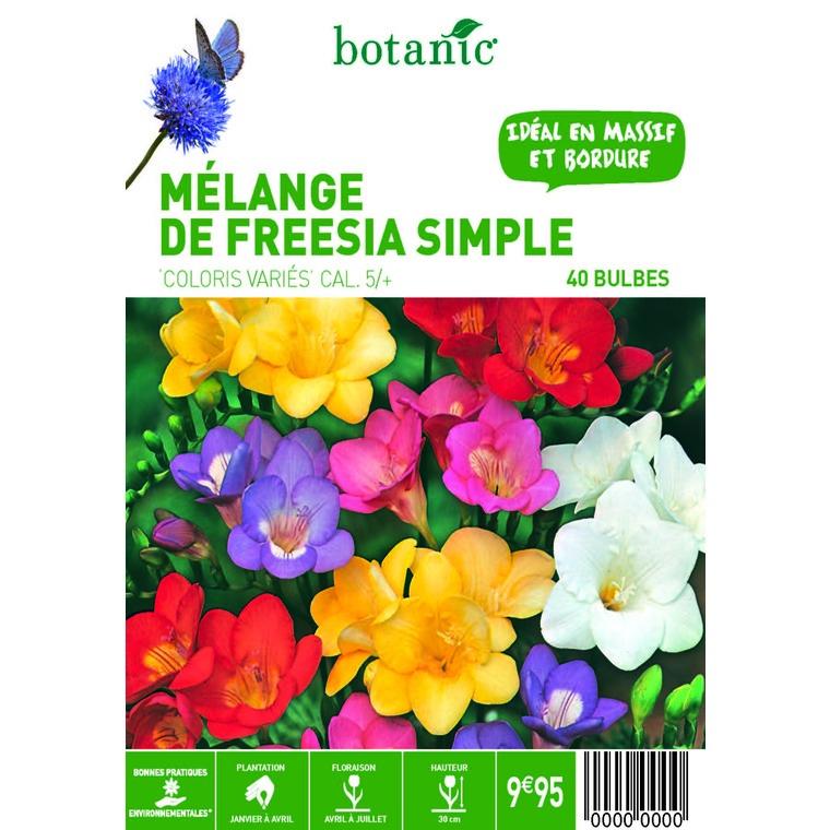 40 bulbes de Mélange de Freesia Simple en panier – Couleurs Variées 310340