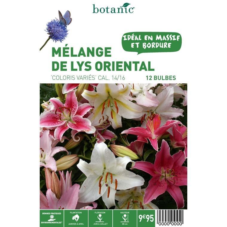 12 bulbes de Mélange de Lys Oriental en panier – Couleurs Variées 310345