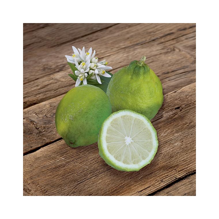 Citronnier des Antilles en pot de 3 L Bio 310403