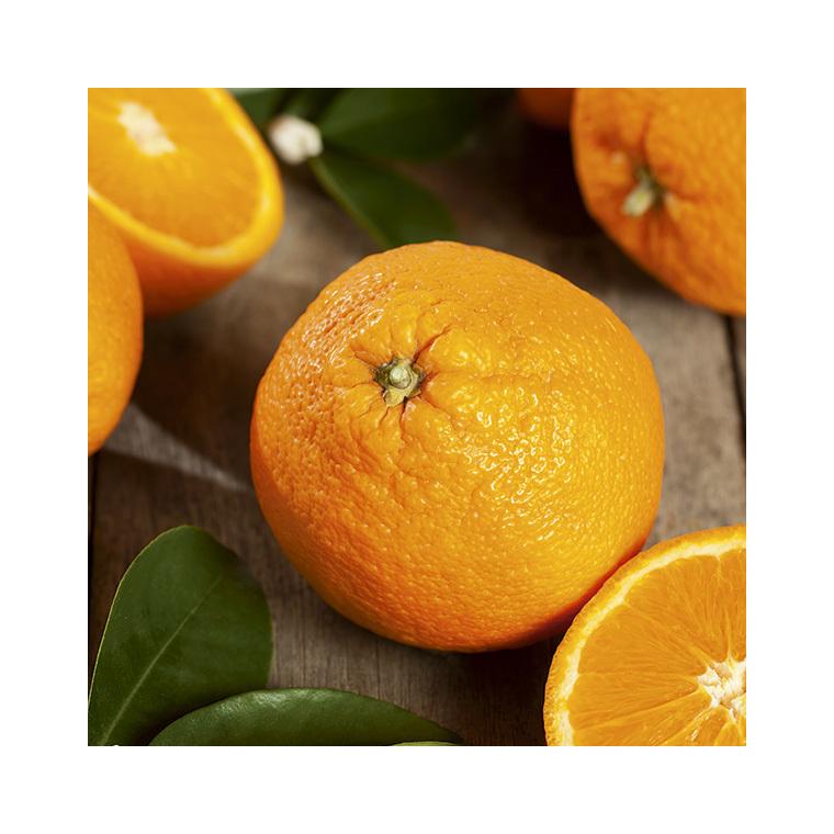 Oranger bio Le pot de 3 litres 310410