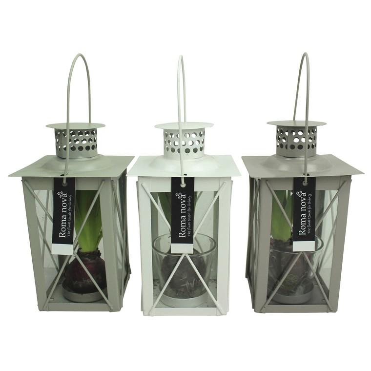 composition 1 jacinthe pot zinc flocon gris la. Black Bedroom Furniture Sets. Home Design Ideas