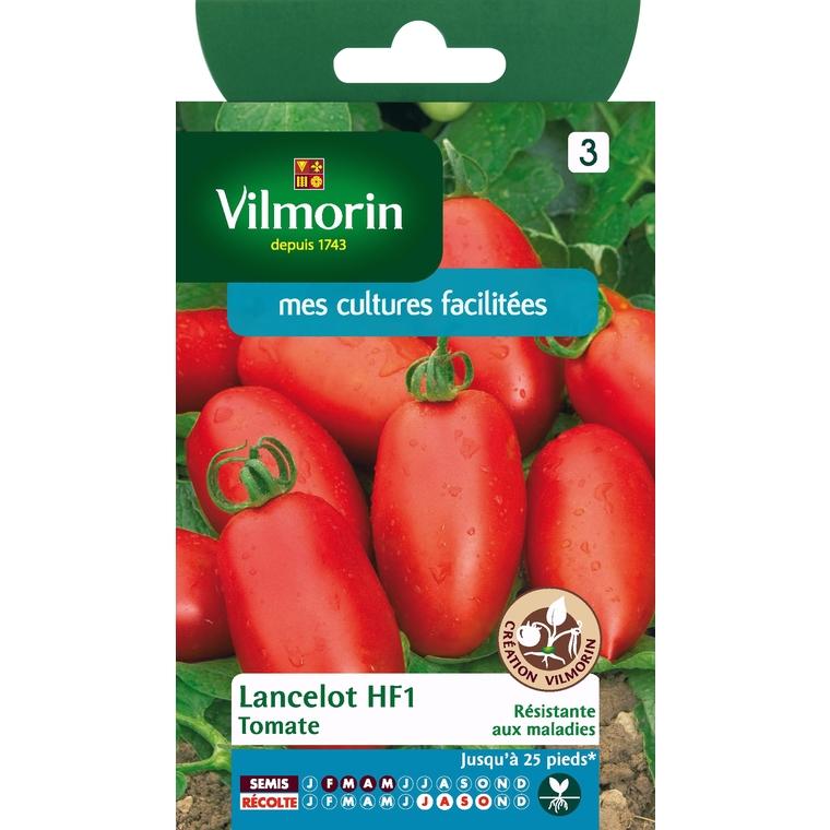 Tomate lancelot HF1 312831