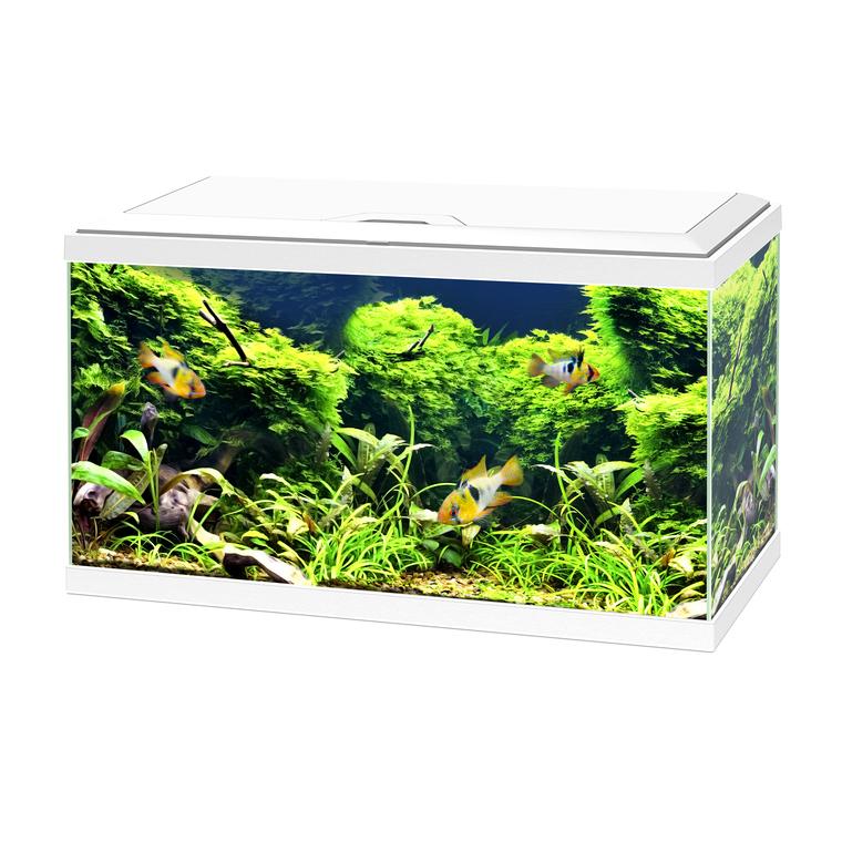 Aquarium blanc 60 avec LED 60 x 30 x 32 cm 330536