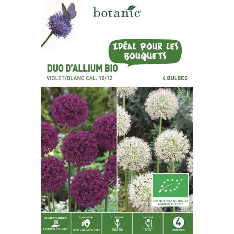 Bulbe duo d'allium violet et blanc botanic® x 4 334571