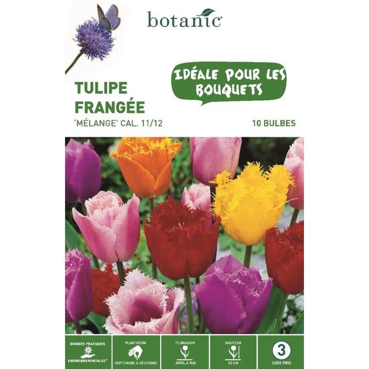 Bulbe tulipe crispa en mélange multicolore botanic® x 10 334644