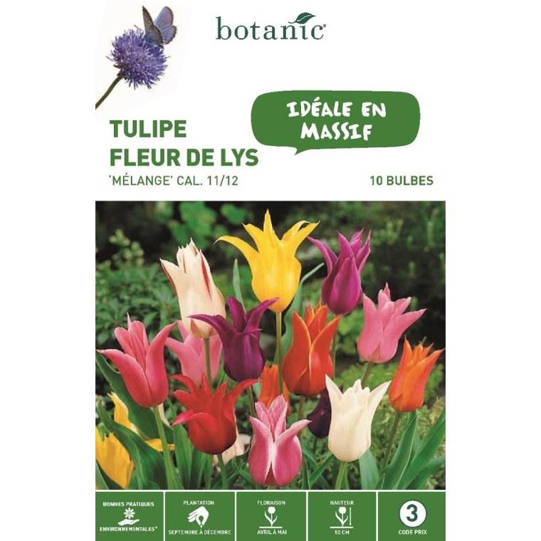 Bulbe tulipe fleurs de lys en mélange multicolore botanic® x10 334670