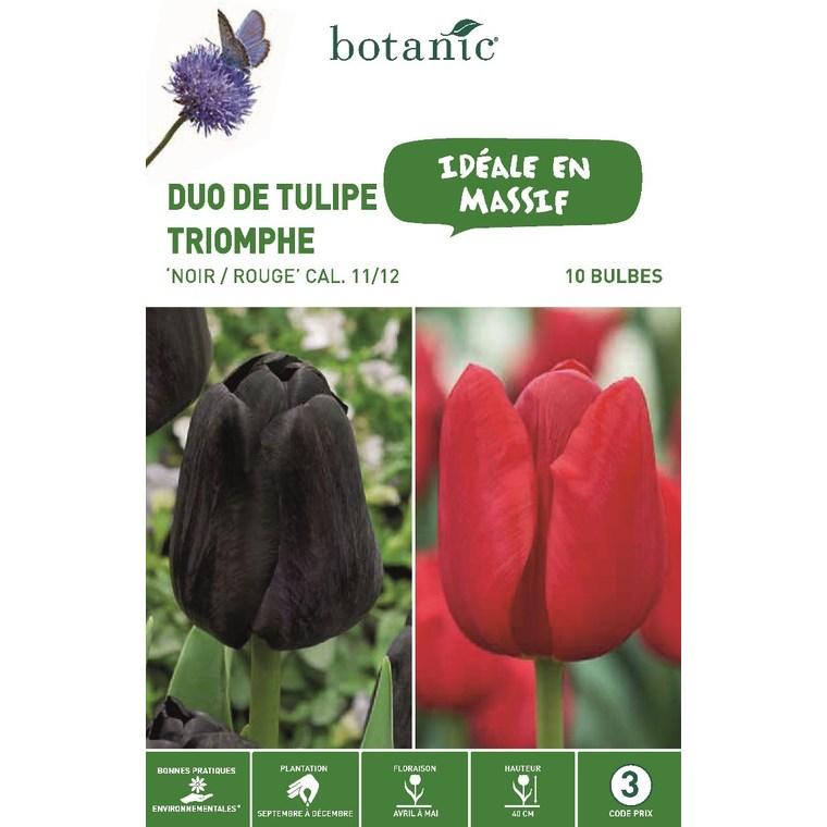 Bulbe duo de tulipe triomphe rouge et noir botanic® x 10 334684