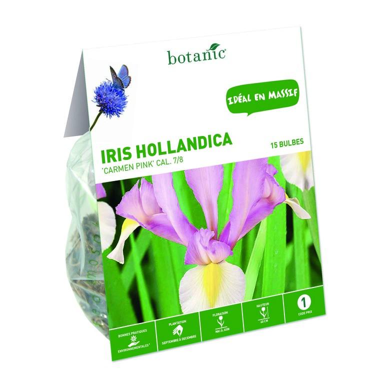 Iris blanc de Hollande 15 bulbes de calibre 7 à 8 – 1 m 334736