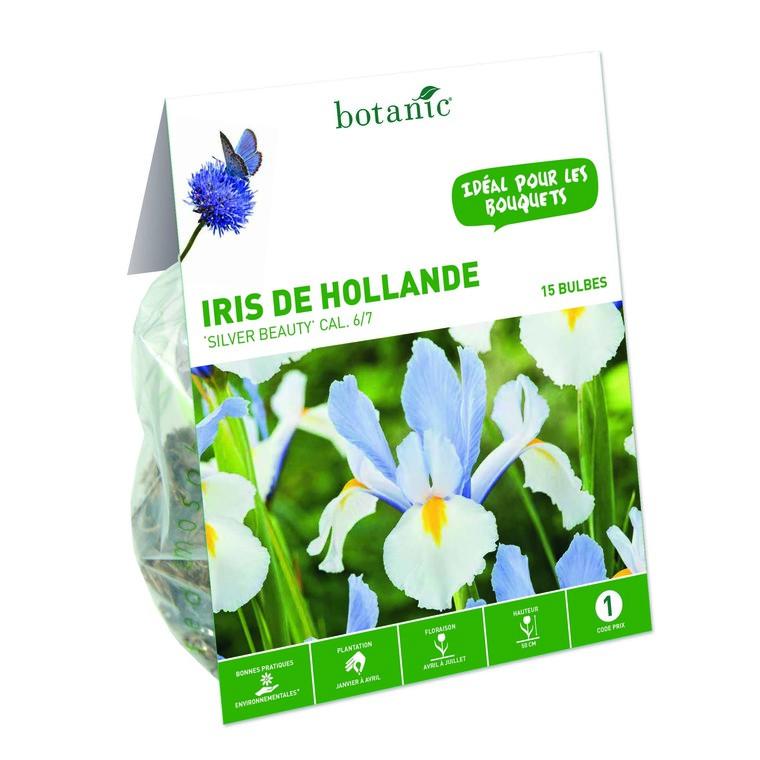 Iris multicolore de Hollande 15 bulbes de calibre 7 à 8 – 1 m 334737