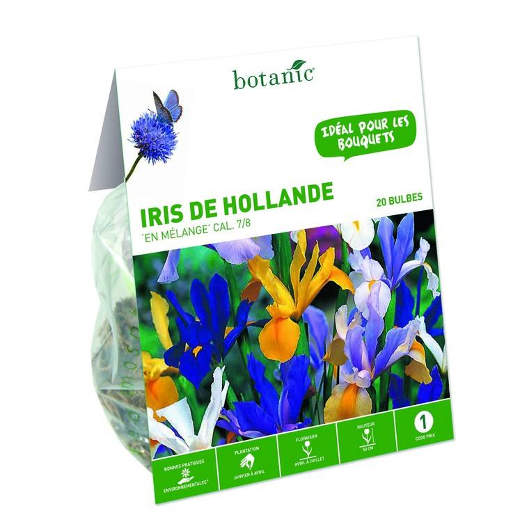 Iris multicolore de Hollande 20 bulbes de calibre 7 à 8 – 1 m 334739