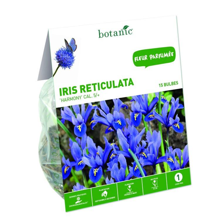 18 bulbes d'Iris Hollandica Reticulata Harmony Bleu calibre 5 335017