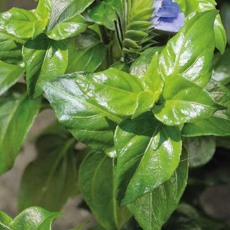 Plante saveur Champignon. Le pot de 1 litre recyclé 335779