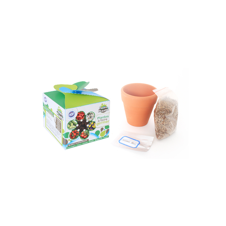 Kit de plante à semer variétés assorties 341418
