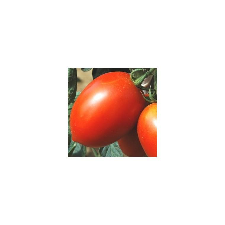 Tomate allongée Roma. La barquette de 3 plants 341634