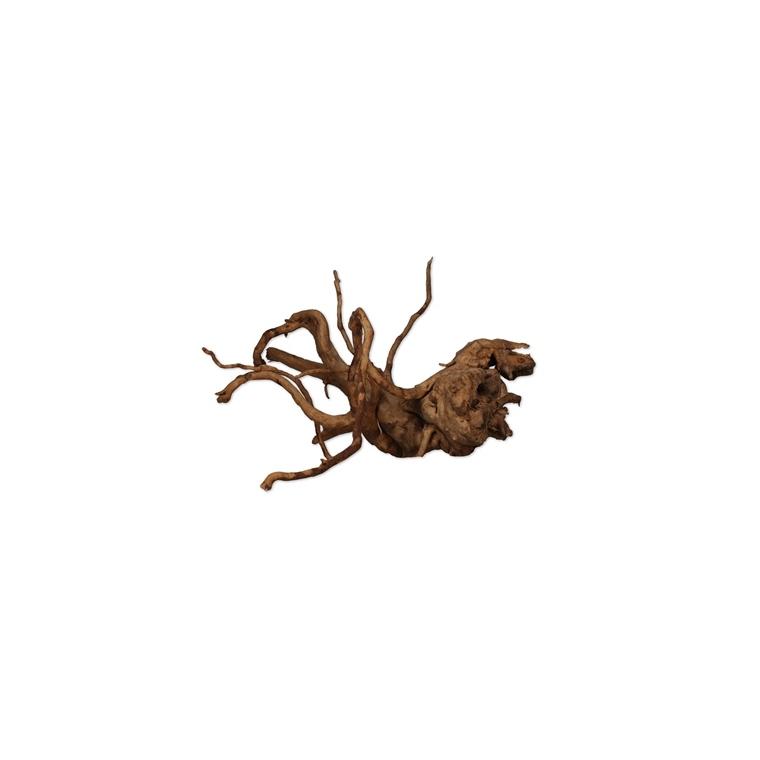Vigne araignée rare rouge taille XS 10 x 15 cm 342683