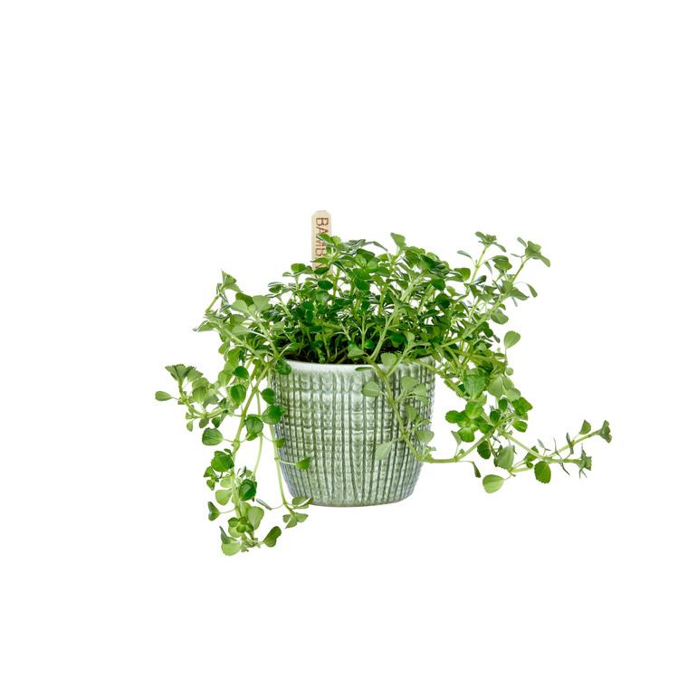 Plantes vertes mix avec cache pot Ø 6 cm 345202