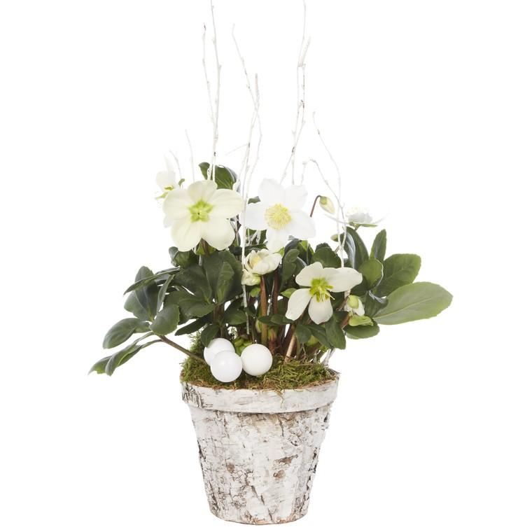Rose de Noël pot bouleau. Le pot 346592