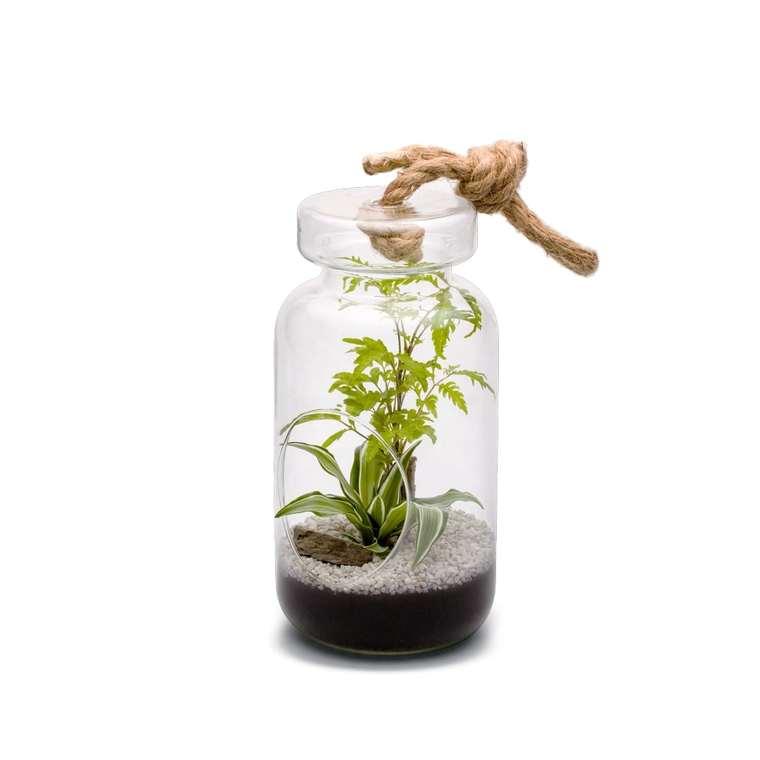 Terrarium Jeroboam L en verre à poser ou suspendre Ø 14 cm x H 28 cm 371723